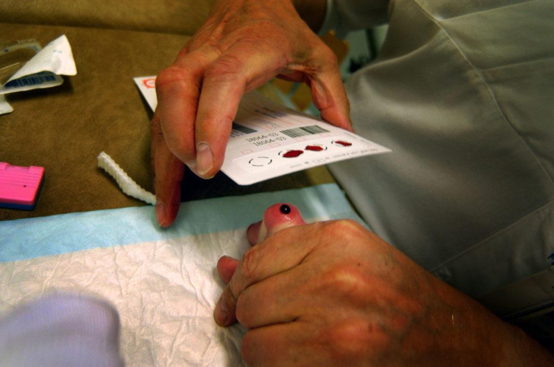 For å oppnå optimale resultater bør blodprøven tas mens babyen er mellom 48 og 72 timer gammel. Foto: Rune Stoltz Bertinussen